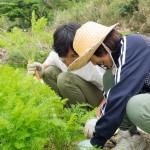 沖縄で楽しく週末農業!沖縄移住者の畑にお邪魔してきました。その1