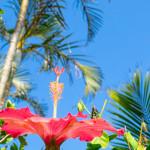 沖縄移住に何を求める?いろいろな沖縄移住の理由