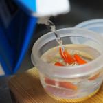 [簡単レシピ]島唐辛子をもらったのでコーレーグースを作ってみる