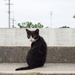 【猫写真】久高島の島猫たちを撮ってきました
