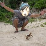 沖縄のやたらでかいカニ「オカガニ」に、初めて出会いました
