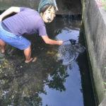 """【自由研究】沖縄の用水路にやたら泳いでいる""""魚""""を捕まえてみる[罠のイラスト解説付き]"""