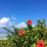 沖縄に住んだら花粉症に悩まなくなった!沖縄は快適な避粉地でもある